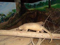 Breeding of endangered Species - Angkor Centre for Conservation of Biodiversity