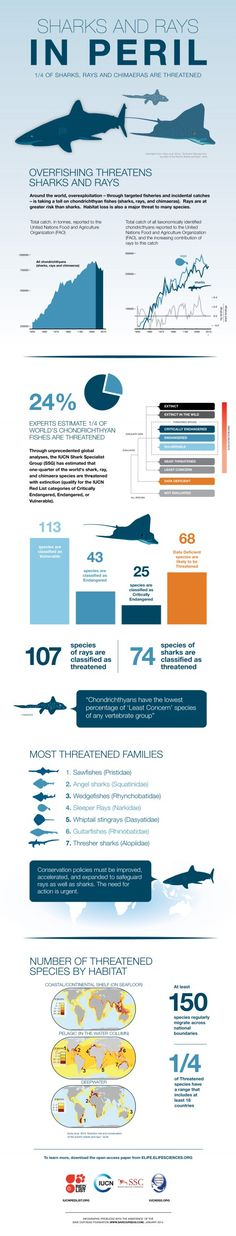 Sharks & rays « Save Our Seas Foundation
