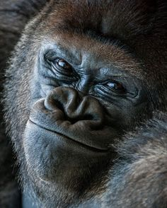 hahahhhah now that's adorable naughty and funny. primates are never innocent. Funny Animal Pictures, Cute Funny Animals, Cute Baby Animals, Cutest Animals, Animal Pics, Animal Memes, Rare Animals, Animals And Pets, Strange Animals