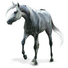 KaKashi, Riding Horse Arabian Horse Dapple Gray #31044731 - Howrse