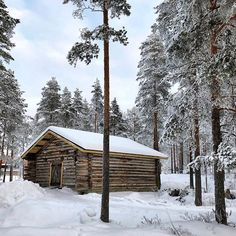 One day Ill have a Finnish cabin in the woods. This is one I found on a walk around @ahtarizoo #nbefinland #ähtäri #finland