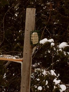 Woodpecker enjoying some suet