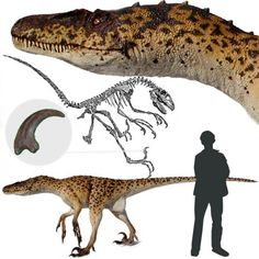 "Deinonychus: The true identity of Jurassic Park's iconic raptors. In fact the movie's ""velociraptors"" were actually modeled after deinonychus. It's just that the name didn't have the same appeal to the author as Velociraptor."