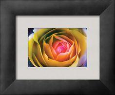 AllPosters -   Fire Spiral in The Flower  Premium Giclee Print - 30 x 23 cm  Harold Davis