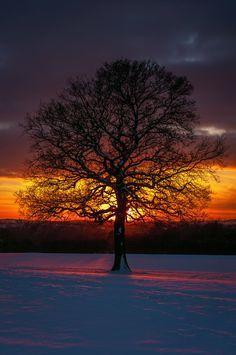 Winter Oak by Grunvald.deviantart.com on @deviantART