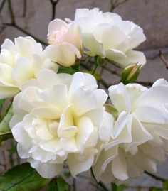 Miei fiori