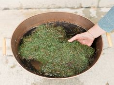 Kokedama - Sheet of moss in water, preparing to press on outside of sphere