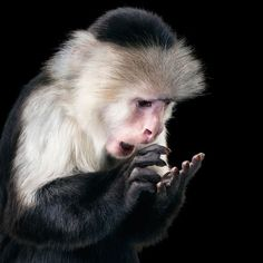 Animals displaying human emotions ~ Monkey