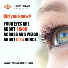 Did you know? Your eyes are about 1 inch across and weigh about ounce! Brickell Miami, Eye Facts, Vision Eye, Marketing Training, Did You Know, Knowing You, The Cure, Eyes, Cat Eyes