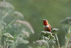 Hummingbird Photograph - Resting With Nature by Angie Vogel