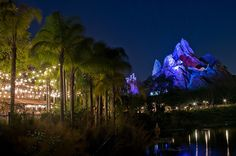 Animal Kingdom Night