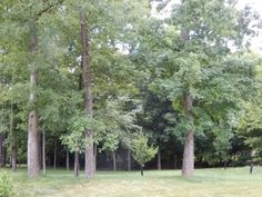 Absolute Estate Auction Thursday, August 14th, 2014 at 5:07 PM *Auction held at Whaler's Catch in Paducah, KY* 29 Lots in beautiful Pines Subdivision in Paducah - no minimum, no reserve. Attractive, partially wooded, grassy & cleared lots. Section 1: 14, 15, 38, 85, 86, 89, 91, & 93; Section 2: 34, 49, 50, 51, 52; Section 3: 7, 8A-8B, 9A-9B, 11A-11B, 12A-12B, 13, 14, 15, 17, 18, 19 & 26. Beautiful single family & duplex tracts. All A-B lots allow townhouses/condos/duplexes.