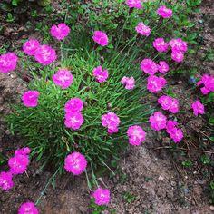 Gazon espagnole? Plants, Inspiration, Gardens, Lawn, Spanish, Biblical Inspiration, Flora, Plant, Planting