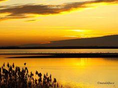 Lake Tisza #Hungary