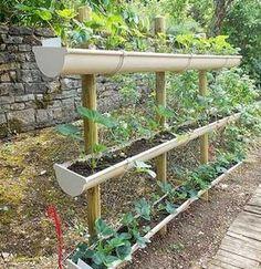 Un jardin potager pour décorer l'allée du jardin est fabriqué à l'aide de trois gouttières en plastiques percées et fixées sur des piquets. Parfait pour planter radis et fraisiers