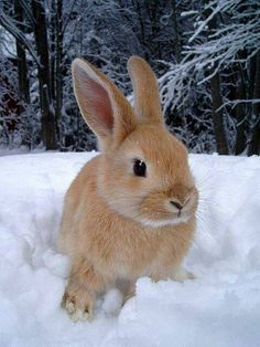 Snow Bunny ~ [Note to self: sent to A.L. 12-2-17]