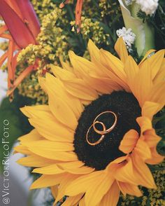 Sunflower and wedding rings photo.