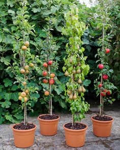 A beginner's guide to growing fruit