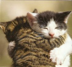 you're my bestest friend .... Hugging #cats and #dogs are so cute. Shared by shopforpaws.com