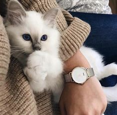The best and most popular CLUSE fashion watches for women to match your style! Clusia, Spring Fashion, Autumn Fashion, White Kittens, Statement Jewelry, Valentine Day Gifts, Valentines, Fashion Watches, Gifts For Mom