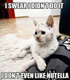 Nutella Porterfield – it's you all in one! Nutella and cats! Nutella Porterfield – it's you all in one! Nutella and cats! Funny Cat Photos, Funny Captions, Funny Animal Memes, Funny Animal Pictures, Funny Animals, Cute Animals, Funny Memes, Funniest Animals, Funniest Pictures