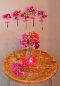 some pink flowers | all the luck in the world-blog. photography. neon pink + orange.