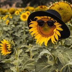 Through our work with older structures like the Sala Beckett, the Casal Balaguer, and the Sunflower Garden, Sunflower Art, Sunflower Fields, Happy Flowers, Flowers Nature, Beautiful Flowers, Sunflowers And Daisies, Yellow Flowers, Wildflowers