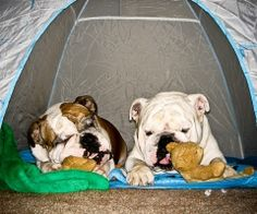 I guess I could camp with these guys... and their teddy bears!