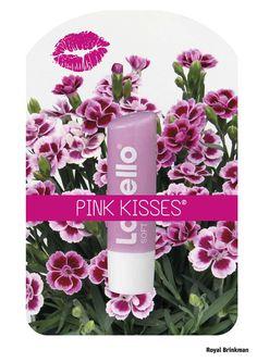 labels, royal brinkman www.royalbrinkman.com Packaging Design, Mugs, Tableware, Pink, Dinnerware, Rose, Cups, Tumblers, Tablewares