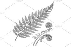 Silver fern hand-drawn pencil illustration isolated on white. Cute Tattoos, Flower Tattoos, Small Tattoos, Tattoos For Guys, Tatoos, Line Drawing Tattoos, Line Work Tattoo, Tattoo Drawings, Pencil Illustration