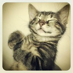 Content confident sleeping cat