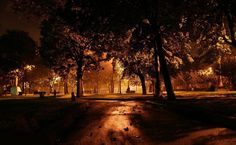 Night in the park HD Wallpaper