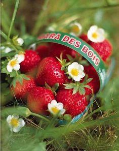 ᵃᶰᵈ ᶤᶠ ᶤ ᵇᶤᵗᵉ ᵃ sᴛʀᴀᴡʙєʀʀʏ ᵇᶤᵗᵉ ʸᵒᵘ ᵗᵒᵒ . E se mordo una fragola . Strawberry Farm, Strawberry Picking, Strawberry Plants, Fruit Facts, Strawberry Fields Forever, Pepper Seeds, Plant Catalogs, Hardy Perennials, Farm Theme