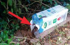 Geniální trik jak se zbavit šneků na zahrádce!  Zachraňte Vaší úrodu a krásné kytičky!