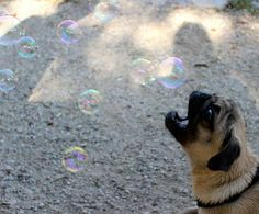 It looks like he's making the bubbles!!