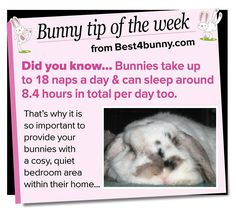 Bunny tip of the week - Bunny naps!