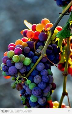 Wow, what a great photo of grapes!