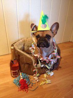 """Happy New Year, and Stuff!"", French bulldog"