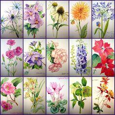 7 das Artes: Mostruário de flores em aquarela por Adelene Fletcher.