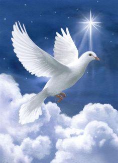 The Holy Spirit as a Dove Dove Images, Dove Pictures, Angel Pictures, Graffiti Kunst, Jesus Christ Images, Saint Esprit, Peace Dove, Prophetic Art, White Doves