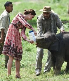 Kate Middleton Fed a Baby Elephant in a Topshop Dress —What Did You Do Today?