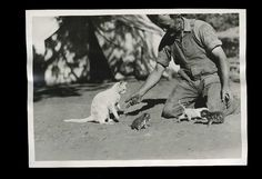 This mother cat and her kittens, 1920