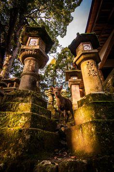 Among the Lanterns of Nara, Japan
