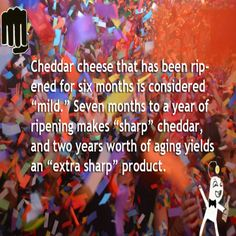 """Cheddar cheese that has been ripened for six months is considered """"mild"""". Seven months to a year of ripening makes """"sharp"""" cheddar, and two years worth of aging yields an """"extra sharp"""" product."""