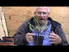 Rooted Cuttings. How to pot and or plant them, how, when, how often and how much to prune them. - Mike's Backyard Nursery