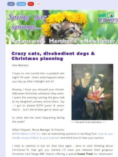17 Dogs Who Discreetly Bend Their Owner's Rules Crazy cats, disobedient dogs  Christmas planning - Vetanswers Members eNewsletter 1/11/2013