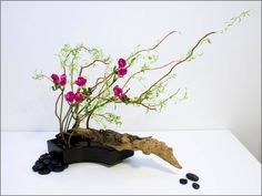 Unlike conventional flower arrangements, which emphasizes on colour and the bloom of different flowers set in a vase, Ikebana pays attention to the overall line and form of all plant material used, and emphasizes minimalism and asymmetry.