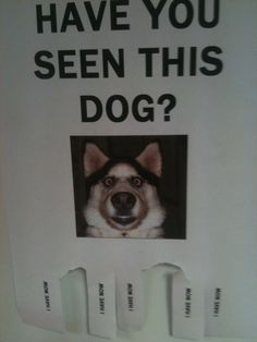 Funny pictures about Have you seen this dog? Oh, and cool pics about Have you seen this dog? Also, Have you seen this dog? Funny Dog Signs, Dog Jokes, Lost, Losing A Dog, Can't Stop Laughing, Have You Seen, I Laughed, Funny Animals, Adorable Animals