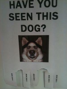 The Funniest Street Fliers: have you seen this dog joke flier