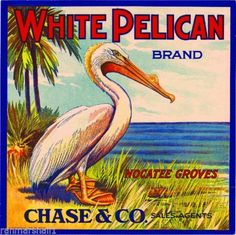 Nocatee-Florida-White-Pelican-Orange-Citrus-Fruit-Crate-Label-Art-Print